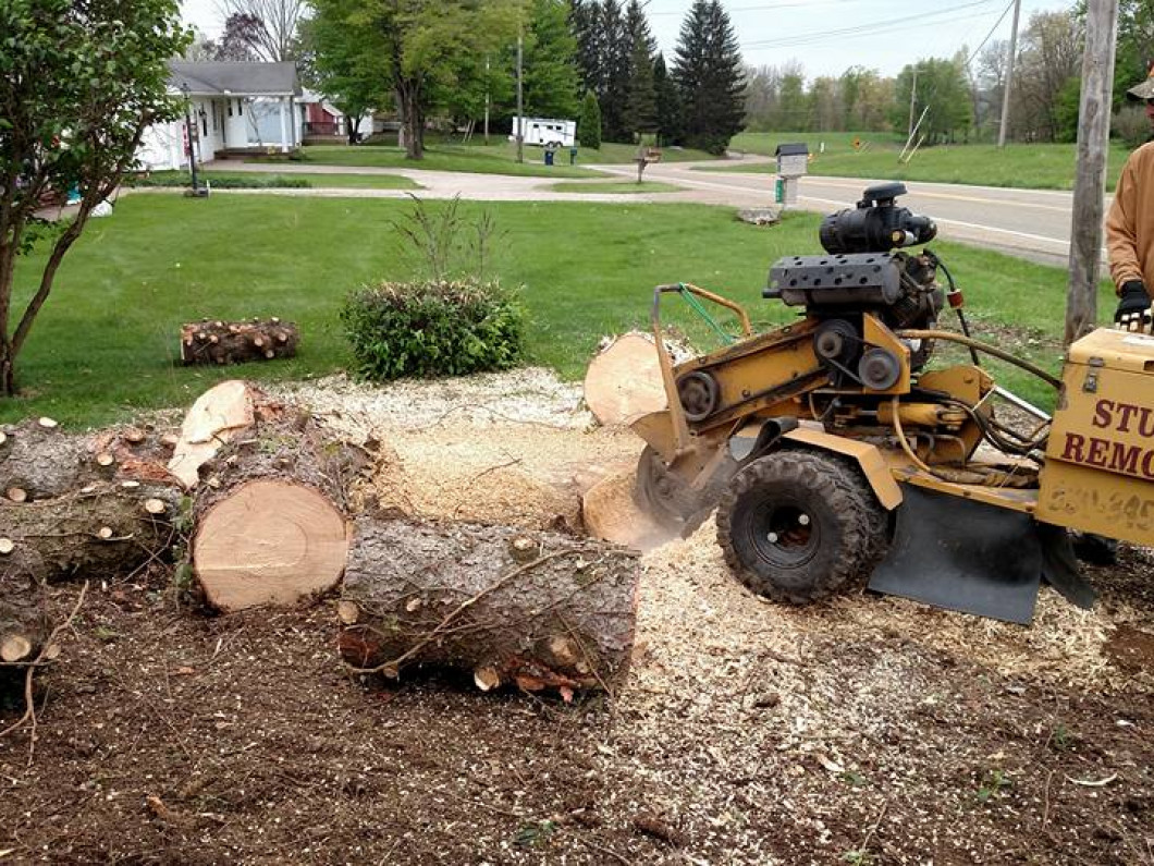 Get a free estimate on tree stump removal
