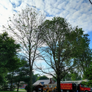 tree removal cambridge oh