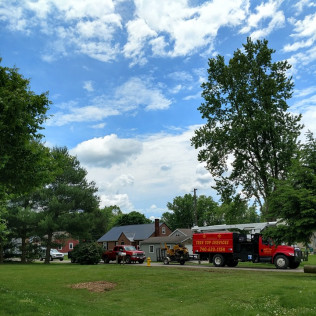 tree removal west lafayette oh